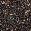 graines sésame noir