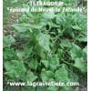 tétragone graines achat vente