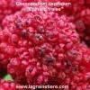 épinard fraise semences
